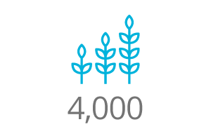 4,000 hectares